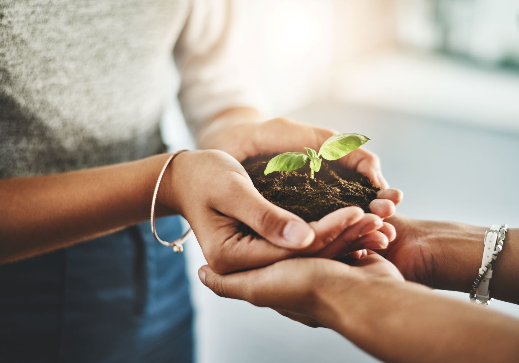 Closeup shot of two unrecognizable people holding a plant growing out of soil